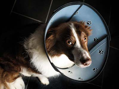 Pet Airs collar for dogs
