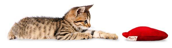 Junge Katze mit 4cats Herzkissen